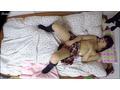 思春期制服娘のビンカンマ○コ・女子寮オナニー隠し撮り Vol.03